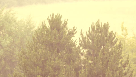 Heavy rain comes. View of falling drops in pine trees background. Filtered light Footage