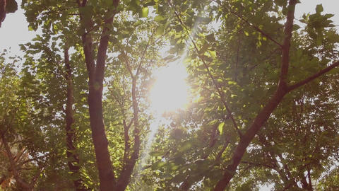 Rays of the sun penetrate through the green foliage of the tree Footage