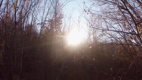 The sun shines through the autumn forest without leaves Footage