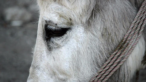 Donkey, Donkey's Eyes, Donkey Close Up, Macro Footage