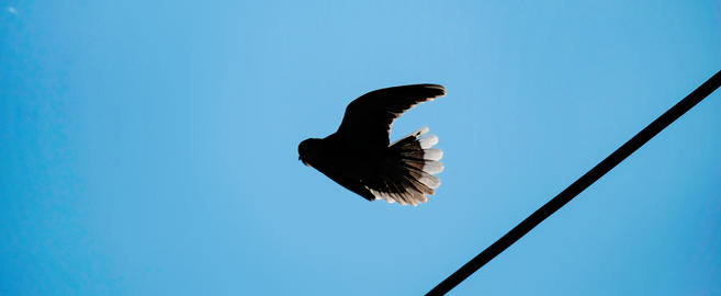 Dove fly from the wires cable Photo