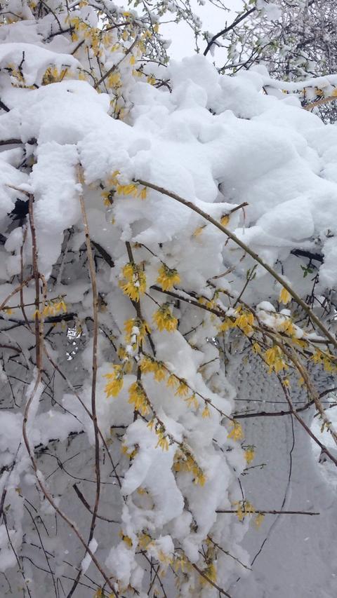 Plant and snow, winter フォト