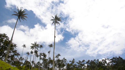 Cocora Valley Timelapse Footage