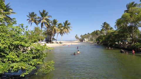 tropical river ビデオ