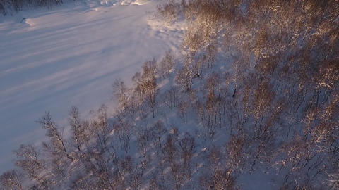 Drone flight over a northern birch forest in winter Footage