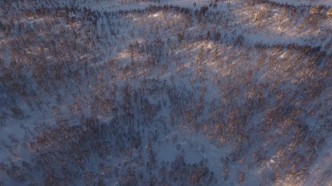 Aerial view of a northern birch forest in winter Footage