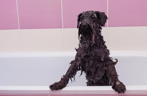 Small black dog having a bath in a bathroom Foto