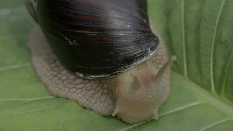 The snail is having breakfast Filmmaterial
