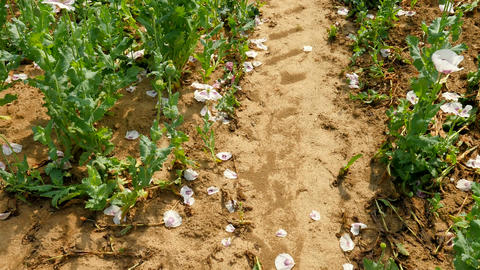 Ecology troubles. Some waterless places and dry flowers in the field within hot  Footage