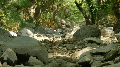 Dry Rocks on Riverbed Footage