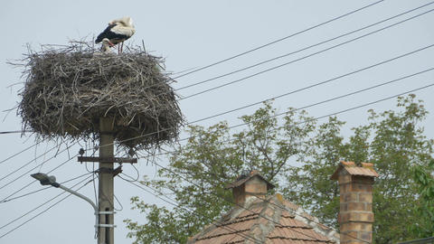 Stork Nest on Street Pillar Footage
