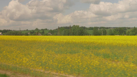 4K Blooming Yellow Rapeseed Fields on Cloudy Spring Day Seen From Car Window Footage