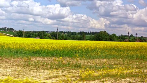 1080p Blooming Yellow Rapeseed Fields on Cloudy Spring Day Seen From Car Footage