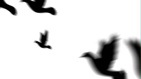 Pigeon Transition After Effects Template