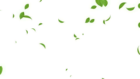 Green Leaf stock footage