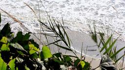 Waves behind the plants.HD 1080 Footage