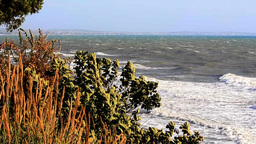 Tidy sea,behind the trees.HD 1080 Footage
