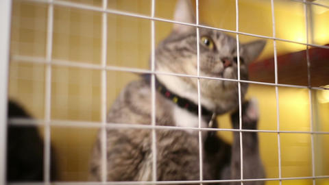 Animal shelter, cats waiting for their new owners Footage