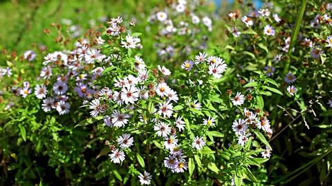 Beautiful wildflowers Footage