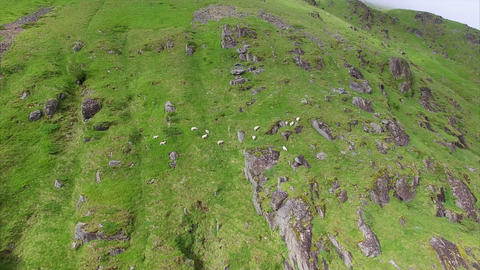 Aerial view of sheep grazing on mountain slope Footage