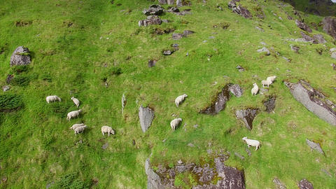 Herd of sheep grazing on steep slope, aerial footage Footage