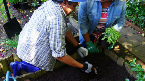 Senior couple planting plants Live Action
