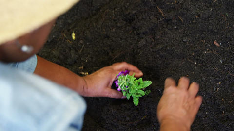 Senior woman planting a plant Footage