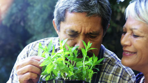 Senior couple smelling plant Footage