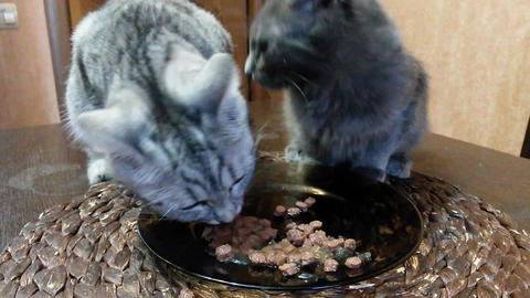 Cats and food (timelaps) Stock Video Footage