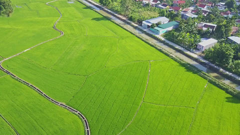 High Aerial View Boundless Rice Fields near Village Footage