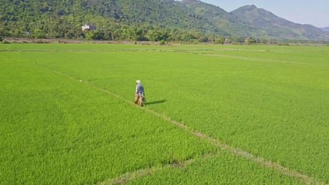 Aerial View Farmer Walks on Path among Rice Fields against Hills Footage