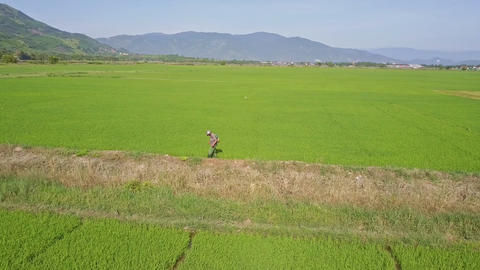 Farmer Sprinkles Rice Field near Bounds by Canal Footage