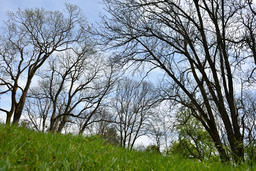 Panorama of a green vibrant park フォト