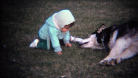1971: Baby and lazy husky dog kissing on grass lawn Footage