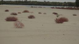 A Tumbleweed Rolls Through The Desert stock footage