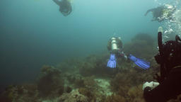 Scuba Divers underwater Footage