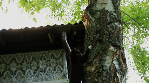 Little kitten is climbing down from the tree Footage