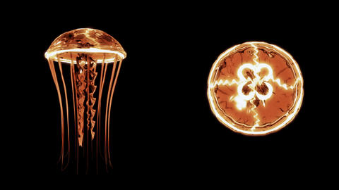 Jellyfish Swimming 4k Loop Assets Isolated on Black Background 画像