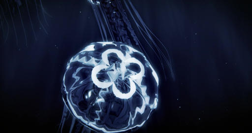 Jellyfish Swimming in 4k Loop (Blue) Animation