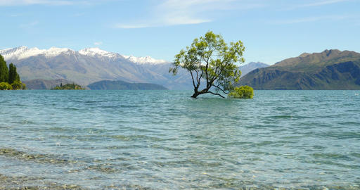 The Famous Wanaka Tree In New Zealand Image
