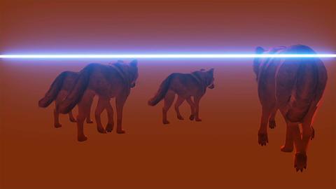 wolfs walks - scan, 3d render animation Animation