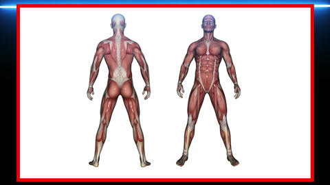 scan of Human Anatomy , Male Muscles - 3d rendering Stock Video Footage