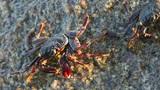 Crabs Footage