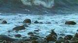Rock beach Footage