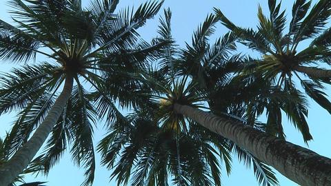 Palmtrees Stock Video Footage