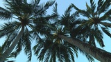 Palmtrees Footage