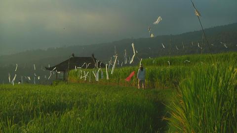 Rice terrace Footage