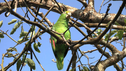 Parrot 08 Stock Video Footage