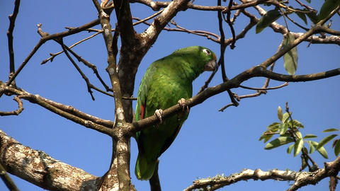 Parrot 02 Stock Video Footage