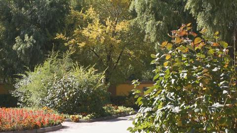 Heihe University. Autumn trees 01 Stock Video Footage